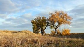 Βράδυ φθινοπώρου με τα δέντρα Cottonwood φιλμ μικρού μήκους