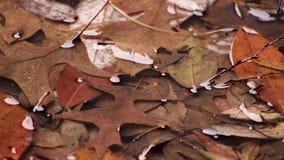 Βρέχοντας υπόβαθρο με τα φύλλα απόθεμα βίντεο