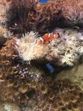 Βρήκαμε Nemo στοκ φωτογραφίες με δικαίωμα ελεύθερης χρήσης