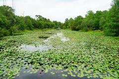 Βραδύτατος κήπος εγκαταστάσεων της Φλώριδας στοκ εικόνα με δικαίωμα ελεύθερης χρήσης