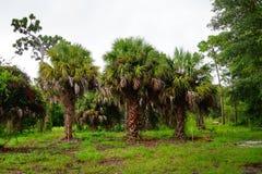 Βραδύτατος κήπος εγκαταστάσεων της Φλώριδας στοκ φωτογραφίες με δικαίωμα ελεύθερης χρήσης