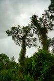 Βραδύτατος κήπος εγκαταστάσεων της Φλώριδας στοκ εικόνες
