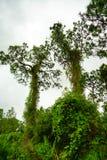 Βραδύτατος κήπος εγκαταστάσεων της Φλώριδας στοκ φωτογραφίες