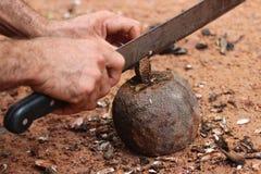 βραζιλιάνα καρύδια στοκ εικόνα με δικαίωμα ελεύθερης χρήσης