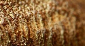 βραζιλιάνο καρύδι λεπτο&m στοκ εικόνα