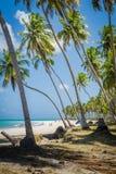 Βραζιλιάνα παραλία-παραλία Carneiros, Pernambuco Στοκ εικόνα με δικαίωμα ελεύθερης χρήσης
