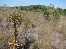 Βραζιλιάνο Cerrado Στοκ εικόνες με δικαίωμα ελεύθερης χρήσης