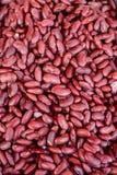 Βρασμένα κόκκινα φασόλια στοκ φωτογραφία με δικαίωμα ελεύθερης χρήσης