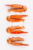 Βρασμένα νύχια καβουριών που απομονώνονται στο άσπρο υπόβαθρο για τα καβούρια και τη θάλασσα Στοκ φωτογραφίες με δικαίωμα ελεύθερης χρήσης