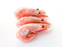 βρασμένες γαρίδες Στοκ φωτογραφία με δικαίωμα ελεύθερης χρήσης
