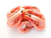 βρασμένες γαρίδες Στοκ εικόνες με δικαίωμα ελεύθερης χρήσης