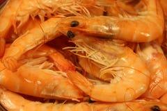 Βρασμένες γαρίδες/γαρίδα Στοκ Φωτογραφία