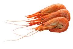 βρασμένες γαρίδες στοκ εικόνα με δικαίωμα ελεύθερης χρήσης
