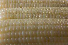 Βρασμένο καλαμπόκι, ξεφλουδισμένη περίληψη εικόνας σύστασης σιταριού καλαμποκιού στοκ εικόνες