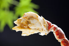 Βρασμένο στον ατμό άσπρο κρέας ποδιών καβουριών Takezaki κόκκινο Στοκ Φωτογραφίες