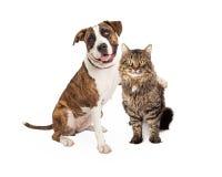 Βραχίονας σκυλιών γύρω από την τιγρέ γάτα στοκ εικόνα με δικαίωμα ελεύθερης χρήσης