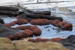 Βραχίονας συγκράτησης στην παραλία άμμου Στοκ φωτογραφίες με δικαίωμα ελεύθερης χρήσης