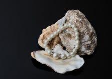Βραχιόλι μαργαριταριών κοσμήματος Στοκ Φωτογραφία