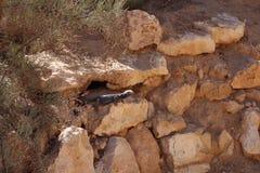 Βρείτε το κρυμμένο iguana, είναι σε θέση να καλύψουν καλά στοκ εικόνα με δικαίωμα ελεύθερης χρήσης