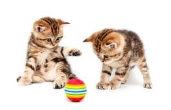 βρετανικά γατάκια τριχώματ Στοκ φωτογραφίες με δικαίωμα ελεύθερης χρήσης