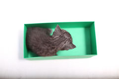 Βρετανικά γατάκια Shorthair που παίζουν σε ένα κιβώτιο Στοκ φωτογραφίες με δικαίωμα ελεύθερης χρήσης