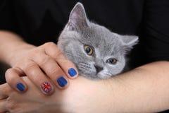 Βρετανικές γατάκι Shorthair και σημαία του Union Jack Στοκ φωτογραφία με δικαίωμα ελεύθερης χρήσης