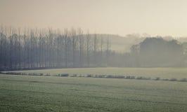 Βρετανική επαρχία στην ομίχλη πρωινού στοκ εικόνες