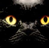 Βρετανική κοντή γάτα τριχώματος Στοκ εικόνα με δικαίωμα ελεύθερης χρήσης