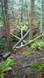 Βρετανική Κολομβία, ακτή, τροπικό δάσος Στοκ Φωτογραφία
