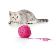 βρετανικό γατάκι κουβαριών σφαιρών που παίζει κόκκινο τιγρέ Στοκ εικόνες με δικαίωμα ελεύθερης χρήσης