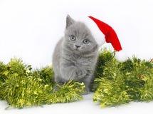 Βρετανικό γατάκι με tinsel Χριστουγέννων. Στοκ εικόνα με δικαίωμα ελεύθερης χρήσης