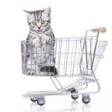 βρετανικό γατάκι τριχώματ&omicro Στοκ φωτογραφία με δικαίωμα ελεύθερης χρήσης