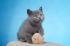 βρετανικό γατάκι shorthair Στοκ Εικόνα