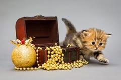 Βρετανικό μάρμαρο γατακιών με τα παιχνίδια Χριστουγέννων Στοκ Εικόνες