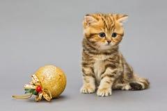Βρετανικό μάρμαρο γατακιών με τα παιχνίδια Χριστουγέννων Στοκ Φωτογραφίες