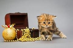 Βρετανικό μάρμαρο γατακιών με τα παιχνίδια Χριστουγέννων Στοκ εικόνες με δικαίωμα ελεύθερης χρήσης