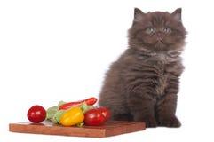 Βρετανικό μακρυμάλλες γατάκι εκτός από τα λαχανικά Στοκ Εικόνες