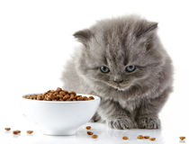 Βρετανικό μακρυμάλλες γατάκι Στοκ Φωτογραφία