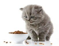 Βρετανικό μακρυμάλλες γατάκι Στοκ εικόνες με δικαίωμα ελεύθερης χρήσης