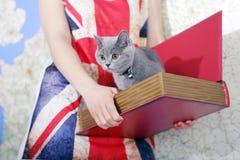 Βρετανικό μωρό shorthair Στοκ Εικόνες