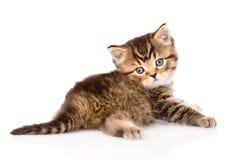 Βρετανικό τιγρέ γατάκι μωρών που εξετάζει τη κάμερα απομονωμένος Στοκ φωτογραφία με δικαίωμα ελεύθερης χρήσης