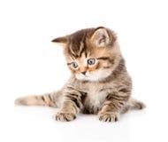 Βρετανικό τιγρέ γατάκι μωρών που κοιτάζει μακριά Απομονωμένος στο λευκό Στοκ Εικόνες