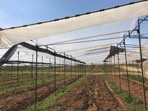 Βρεφικός σταθμός θερμοκηπίων με το έτοιμο χώμα για τη νέα φυτεία, agricu Στοκ Εικόνα