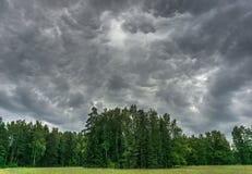 Βροντή στο δάσος Στοκ Εικόνες