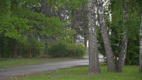 Βροχή άνοιξη στο πάρκο πόλεων απόθεμα βίντεο