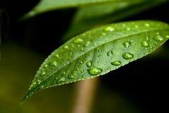 βροχή απελευθερώσεων στοκ φωτογραφία με δικαίωμα ελεύθερης χρήσης