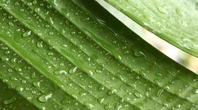 βροχή γεωμετρίας Στοκ Φωτογραφίες