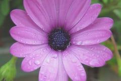 Βροχή ενάντια στο λουλούδι Στοκ εικόνα με δικαίωμα ελεύθερης χρήσης