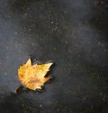 βροχή επίγειων φύλλων πτώσ&eta στοκ φωτογραφίες