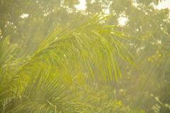 Βροχή με το υπόβαθρο πρασινάδων Στοκ εικόνες με δικαίωμα ελεύθερης χρήσης